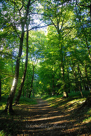 Chemin forestier Ennery Val d'Oise 08/10