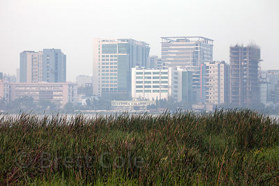 Grasses in the East Kolkata Wetlands, Kolkata, India.  In the background is the planned satellite city of Salt Lake City.