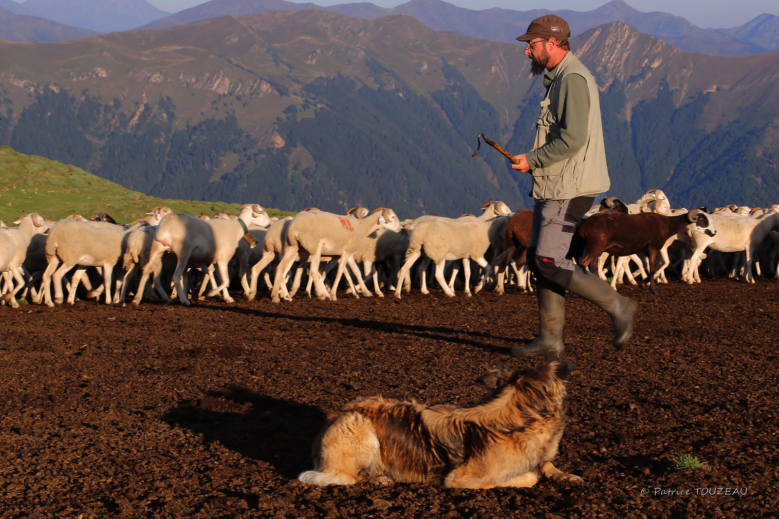 photos of shepherds in the Pyrenees