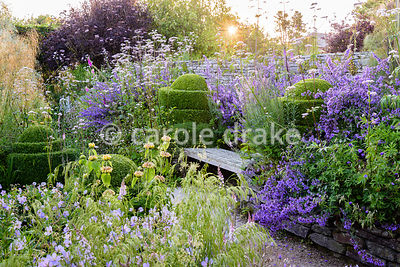 Wooden bench framed by clipped box, Nepeta 'Six Hills Giant' and borders brimming with grasses and herbaceous perennials incl...
