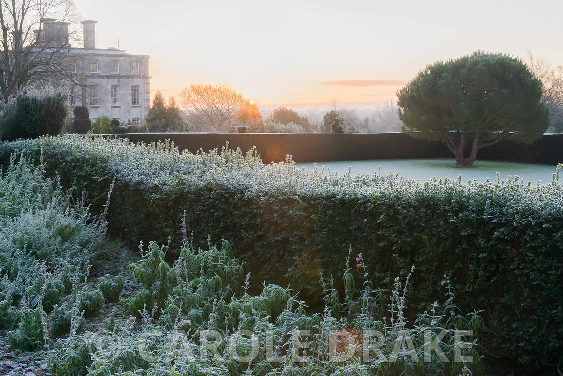 Sun rises above formal gardens defined by yew and box hedging with frosted plants in the Penstemon border in foreground and d...
