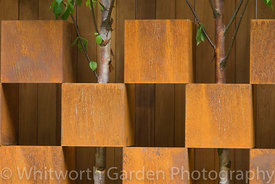 Betula trees growing through a wall created from alternating corten steel boxes. © Rob Whitworth