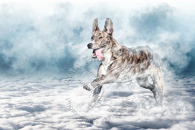Art-Digital-Alain-Thimmesch-Chien-812