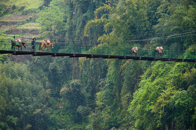 Horses crossing bridge