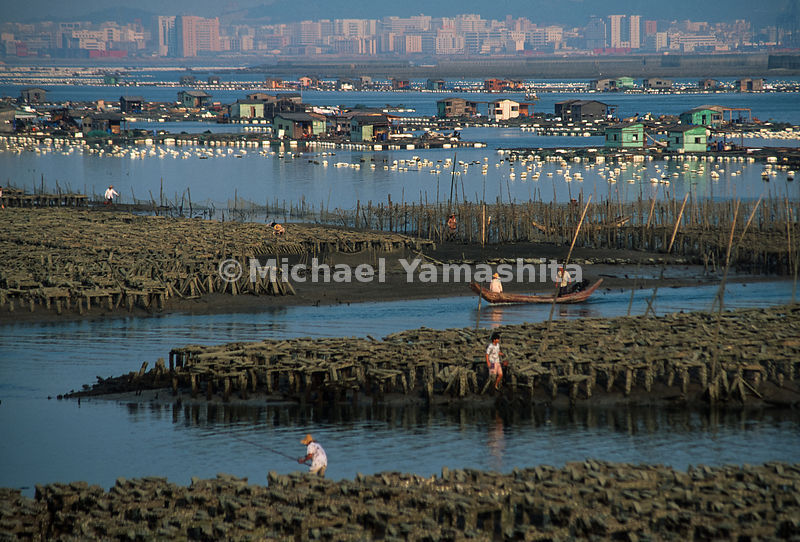 Maluan Bay. Fish Farms and shellfish beds are the largest producers of oysters in China. Feeding happens twice a day at 6am a...