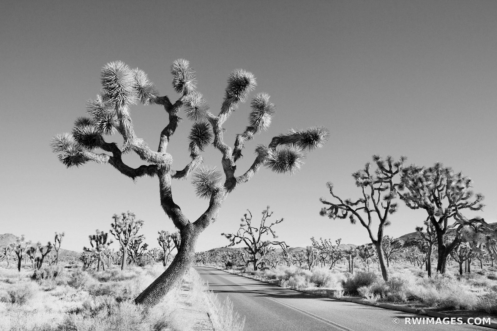 JOSHUA TREE NATIONAL PARK CALIFORNIA BLACK AND WHITE
