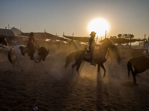 A group of tourists enjoy horse riding early in the morning during the Pushkar fair.