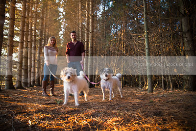two terrier dogs standing in pine forest with owners