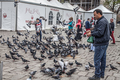 Feeding the birds, Istanbul