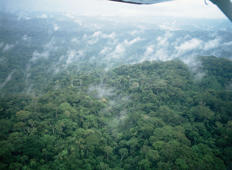 Aerial view of Amazon rainforest, Ecuador