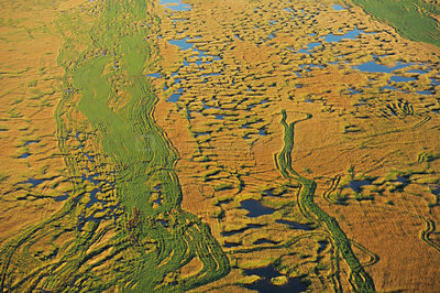 Aerial view over the Danube Delta wetlands, Danube delta rewilding area, Romania, June 2012