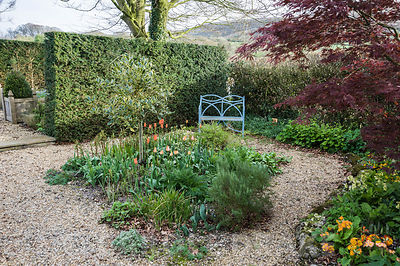 Gravel garden with standard variegated holly, rosemary and orange tulips, with fells beyond. Summerdale House, Lupton, Cumbri...