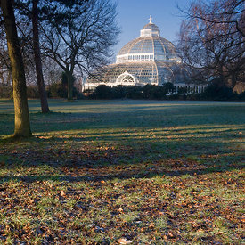 Winter Dawn Palm House