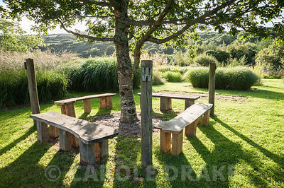 Quercus petraea, the sessile oak, planted in memory of Christina's brother Nicholas, surrounded by four benches, set in a field of grasses, Nicky's Field. Dyffryn Fernant, Fishguard, Pembrokeshire, Wales, UK