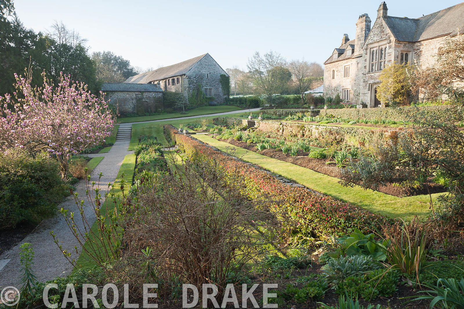 East terrace with magnolia. Cotehele, Cornwall, UK