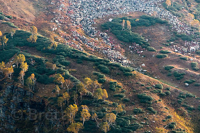 Sunset on scree slopes covered in heather-like plants in autumn, near treeline on Rohtang Pass, Manali, India