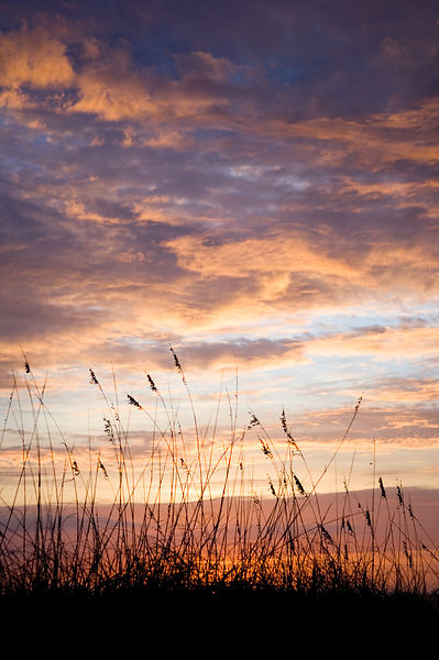 009-Eastern_Landscapes_D105078_Shore_Grass_and_Sunrise_Preview