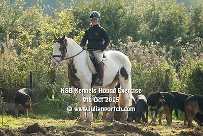2015-10-04 KSB Kennels Hound Exercise
