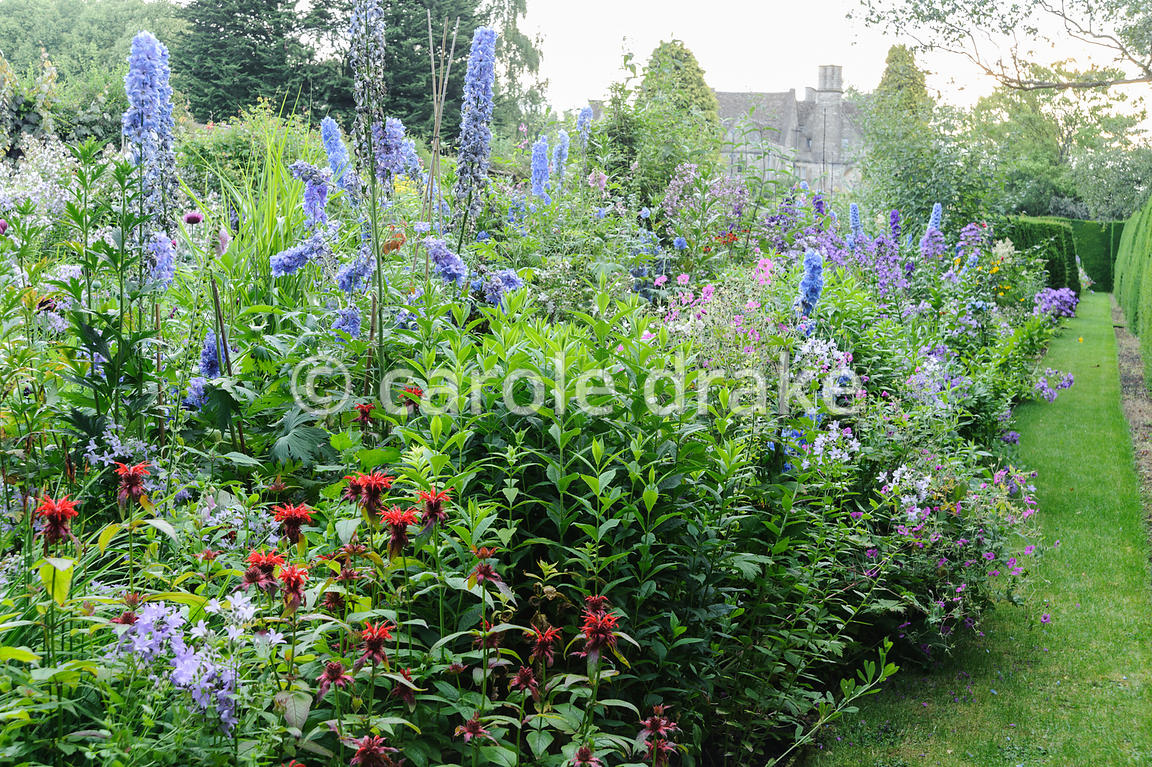 Double herbaceous borders framed with clipped box and tall yew hedges include delphiniums, monardas, campanulas and poppies. Rodmarton Manor, Rodmarton, Tetbury, Glos, UK