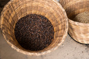 Coffee beans, Omwani Women's Coffee Cooperative, Uganda