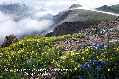 Beartooth Mountains Wildflowers