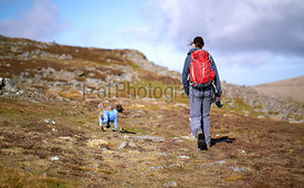 A hiker and their dog approaching the summit of Carrock Fell in the Caldbeck Fells, English Lake District, UK.