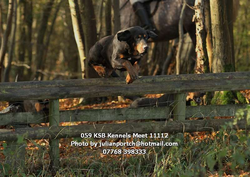 059_KSB_Kennels_Meet_11112