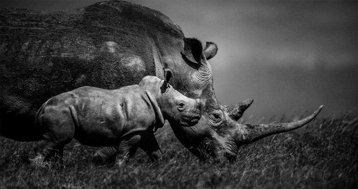 44596-Baby_rhino_and_mum_Kenya_2013_Laurent_Baheux