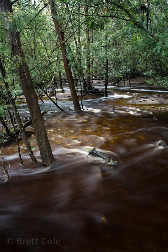 A flooded creek rages through afro-montaine forest after a week of heavy rains, Wildcliff Nature Reserve, South Africa