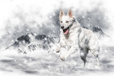Art-Digital-Alain-Thimmesch-Chien-809