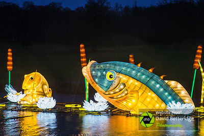 Longleat_Festival_of_Light-57