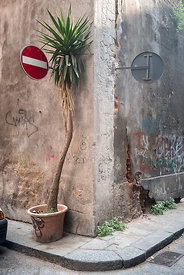 A palm on the street corner, Catania, Sicily, Italy