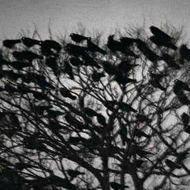The Solitude of Ravens - Masahisa Fukase:  the best photobook of the past 25 years?
