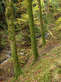 Autumn Trees, Aira Beck