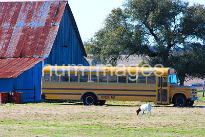 Old school bus in field in Texas Hill Country