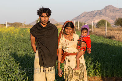 Farming family growing chapati wheat, Kharekhari village, Rajasthan, India