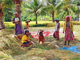 Rice field workers bali