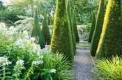 The Well Garden with tall yew spires, central reflecting pool, and planting including white phlox and Cornus controversa 'Var...