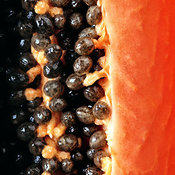Papaya fruit halved macro