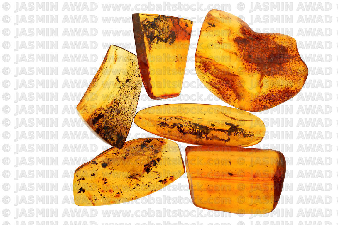 Polished amber pieces with tiny insect fossils Studio shot