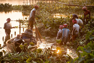 Fishermen gather fish from an area of hyacinth in the East Kolkata Wetlands, Kolkata, India.