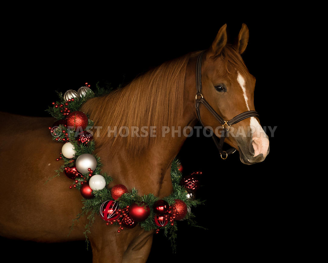 Fast Horse Photography Holiday Horse
