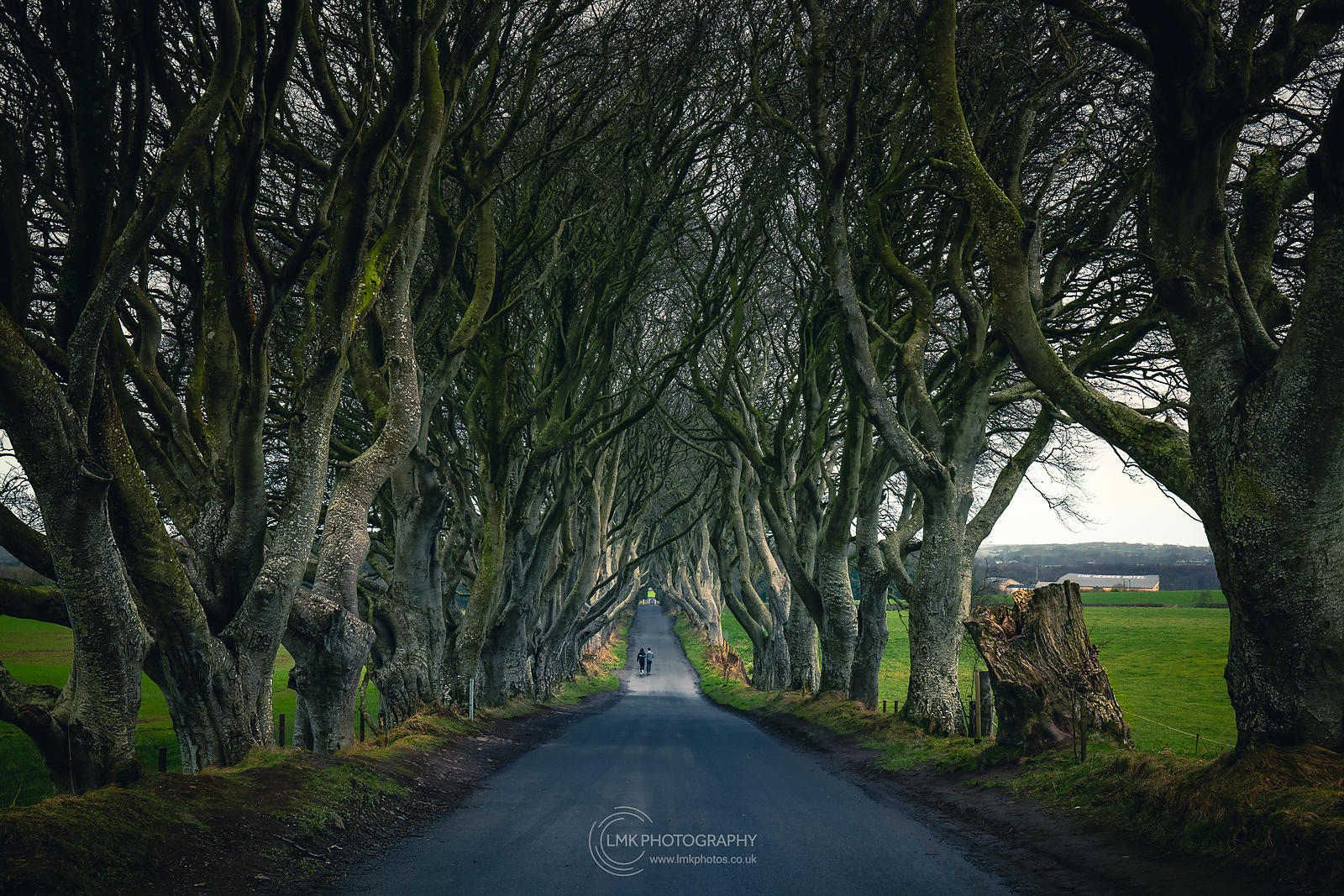 Dark Hedges Moody