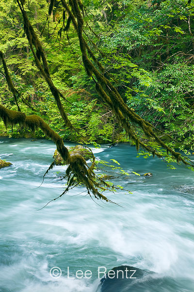 OLYMPIC NATIONAL FOREST: Dosewallips River
