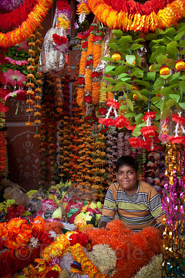 A boy works in his father's shop selling garlands, Jaipur, Rajasthan, India