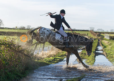 Jumping a hedge - The Belvoir Hunt at Long Clawson, 15/12/12
