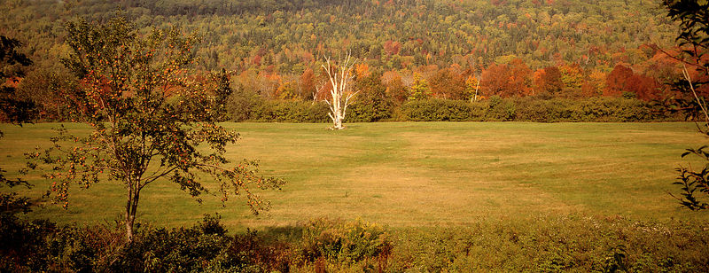 Lovely meadow in the fall