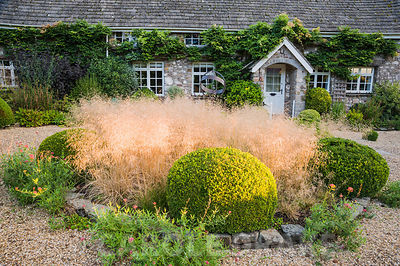 Circular bed in the front garden edged with spherical clipped box balls and filled with Deschampsia caespitosa 'Goldschlier',...