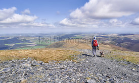 A hiker and their dog descending the summit of Skiddaw towards Broad End, the English Lake District. UK.