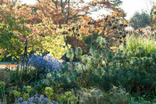 Herbaceous and grasses garden features large clumps of grasses such as miscanthus and herbaceous plants including euphorbias,...